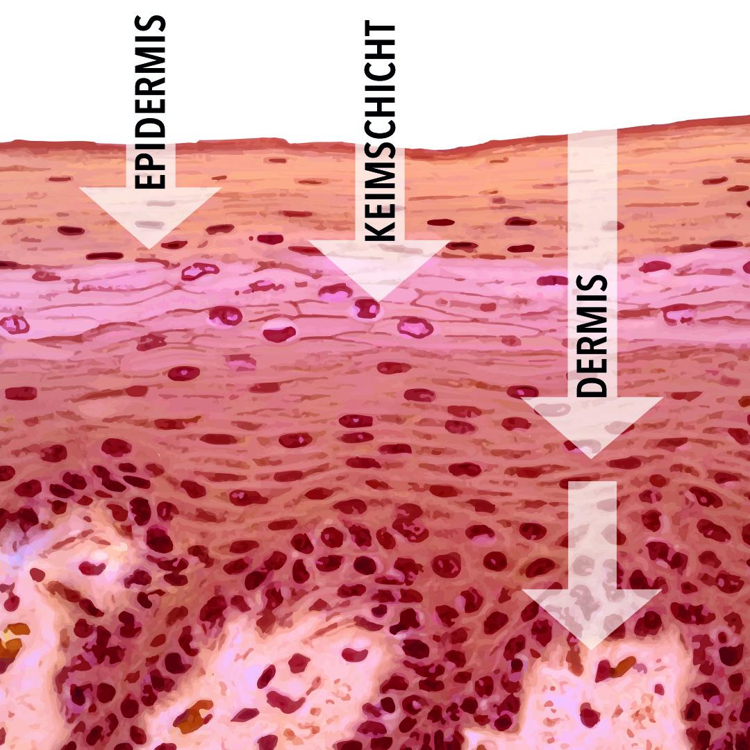 DMS-Basis von dermaceutical